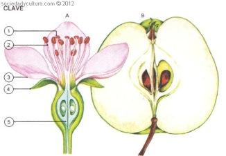 Frutos y flores